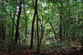 Dark Forest Stock Photography