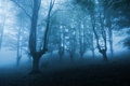 Dark forest with dense fog a Royalty Free Stock Photos