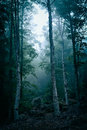 Dark forest with fog Royalty Free Stock Photo