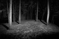 Dark forest at night monochrome image Stock Photography
