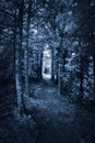 Dark forest path infrared photographed with a nm near converted camera of a surreal Royalty Free Stock Photo