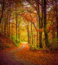 Dark forest road in the autumn forest. Royalty Free Stock Photo