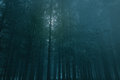 Dark full moon forest rise over a misty at dusk almost night Royalty Free Stock Photos