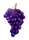 Dark grape Stock Photo