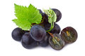 Dark grape in closeup isolated on white background Stock Photography