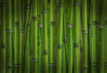 Dark green bamboo sprouts forest Stock Images