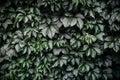 Dark green leaf background, pattern
