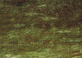 Dark green wood. Natural texture background. Royalty Free Stock Photo