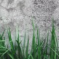 Dark Grey Coarse Concrete Stone Wall Texture, Green Grass, Horizontal Macro Closeup Old Aged Weathered Detailed Natural Gray Royalty Free Stock Photo