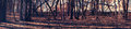 Dark grove of bare trees, panorama Royalty Free Stock Photo