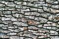 Dark hardwood cortex Royalty Free Stock Image