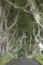 Dark hedges county antrim northern ireland Stock Photography