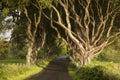 Dark hedges county antrim northern ireland Royalty Free Stock Photos