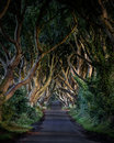 Dark hedges the of county antrim northern ireland and as featured in a popular tv series Royalty Free Stock Photos