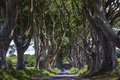 The dark hedges county antrim northern ireland an avenue of ancient trees in in Royalty Free Stock Photos