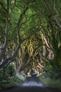 The dark hedges north irland co antrim bregagh road northern ireland Royalty Free Stock Photos