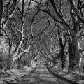 Dark hedges winter in antrim northern ireland Stock Photos