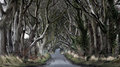 Dark hedges woods of with its strange shape trees northern ireland Stock Photography