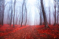 Dark mystic forest during fall Stock Images