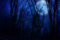 Dark night forest agaist full moon Stock Photos