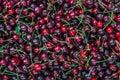 Dark red cherries Royalty Free Stock Photo