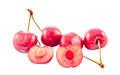 Dark-Red cherries, isolated, white background Royalty Free Stock Photo