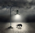 Dark side beautiful artistic image with a streetlight that illuminates a crow and cobblestones with a and cloudy sky on the Royalty Free Stock Images