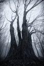 Dark spooky giant tree on halloween haunted Stock Image