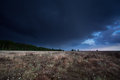 Dark stormy sky over marsh with cotton grass drenthe netherlands Stock Images