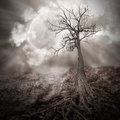 Dark tree alone woods large roots growing old dry landscape against full moon clouds sky sad scary time concept Royalty Free Stock Image