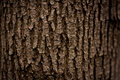 Dark Tree Bark Texture Royalty Free Stock Photo
