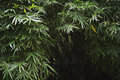 Dark Tropical Jungle Bamboo Ba...