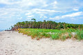Darss weststrand beach grassland with the typical windswept trees Royalty Free Stock Image
