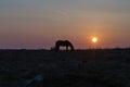 Dartmoor pony at sunrise with behind photo taken near haytor national park devon Royalty Free Stock Photography