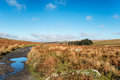 Dartmoor track a winding past sheepstor on nationla park in devon Royalty Free Stock Images