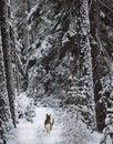 Dashing through the snow Royalty Free Stock Photo