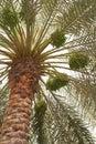 Data a palmeira Fotos de Stock