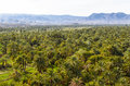 Date palm plantations in Morocco Royalty Free Stock Photo