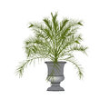 Date palm tree in a vase