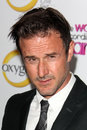 David Arquette Royalty Free Stock Photo