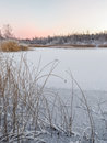 Dawn reed on a frozen lake with fresh snow covered fallen at Stock Photography