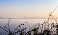 Dawn sea and coastal line in the early morning hours with plants in the foreground Royalty Free Stock Photography
