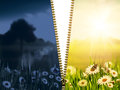 Day and night natural backgrounds with beauty chamomile flowers Stock Images