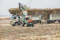 De arbeiders laden suikerrietstelen op een vrachtwagen Stock Afbeelding