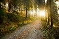 De bosweg van de herfst Royalty-vrije Stock Foto