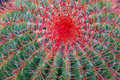 De cactus van de close-up Stock Afbeelding