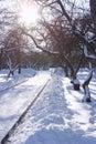 De Dag van de winter in Park met Heldere Zon Stock Foto's