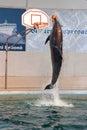De dolfijn toont in Dolphinarium Royalty-vrije Stock Foto's
