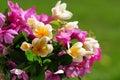 De foto van de close-up van roze en witte bloemen. Stock Foto's