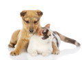 De hond en de kat hebben samen een rust Stock Afbeeldingen